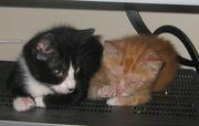 kittens.684x435.jpg