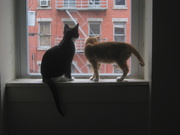 cats_in_window.800x600.jpg